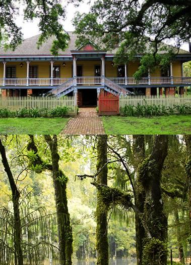 Plantation Swamp Tour Combo